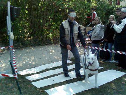guide dog schools