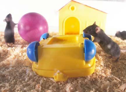 rfi des souris capables de se d sint resser de la coca ne. Black Bedroom Furniture Sets. Home Design Ideas