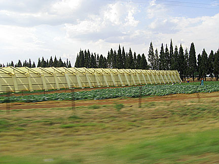 Ferme sur la route d'Harare.(Photo : Cyril Bensimon/RFI)
